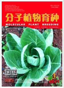 分子植物育种农业期刊论文发表